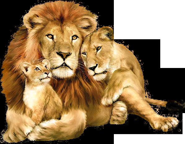 kisspng-lion-felidae-wallpaper-a-lion-5a9495d69e6981.4706697515196871266489.png